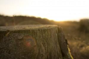 Sunday inspiration - sunset