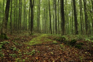 Sunday inspiration forest